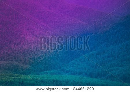 Pine Tree Evergreen Forest, Deep Woods Backdrop. Photo Depicting A Beautiful Mystic Dark Misty Backw