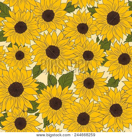 Hand Drawn Pattern Of Sunflowers Background. Flower Sunflower Yellow And Brown. Packaging, Oil Produ