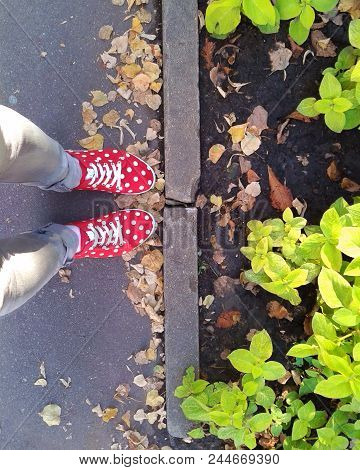 Teen Women Girl's Red Sneakers Shoes With White Dots Pattern Jeans Legs Asphalt Land Leaves Autumn W