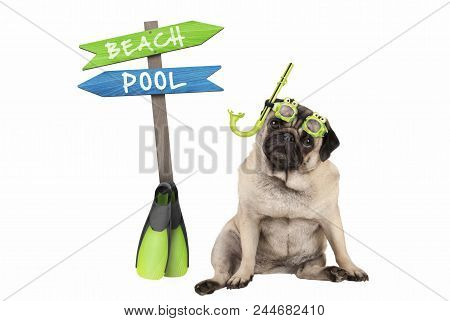 Cute Smart Pug Puppy Dog Sitting Down Wearing Goggles And Snorkel, Next To Signpost With Text Pool A