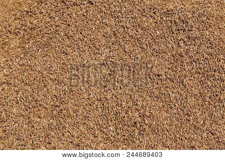 Cumin Jeera Spice Background. Close-up View Of Zira. Cumin Seeds From Above. High Angle Photo Of Zir