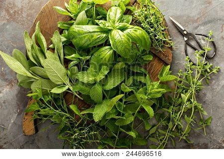 Fresh Basil, Mint, Oregano Thyme And Sage, Cooking With Herbs
