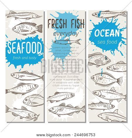 Set Vector Banners Hand Drawn Fish. Seafood Design With Salmon, Anchovy, Codfish, Sea Bass, Ocean Pe