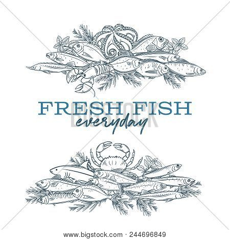 Vector Banners Hand Drawn Fish. Design Seafood With Bream, Mackerel, Tunny Or Sterlet, Codfish And H