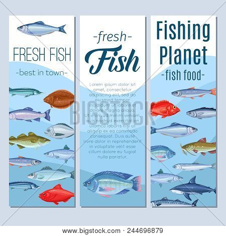 Set Vector Banners Fish. Seafood Design With Salmon, Anchovy, Codfish, Sea Bass, Ocean Perch And Sar