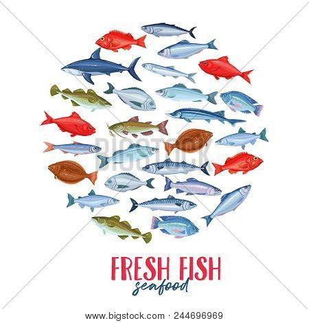Vector Roud Banner With Fish. Seafood Design With Salmon, Anchovy, Codfish, Sea Bass, Ocean Perch An