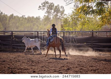 Cowgirl Competing In A Campdrafting Event At A Country Rodeo. Campdrafting Is A Unique Australian Sp