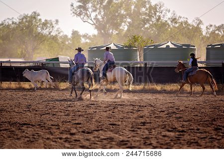 Cowboys And A Cowgirl Riding Horses In A Campdraft Event At A Country Rodeo. Campdrafting Is A Uniqu