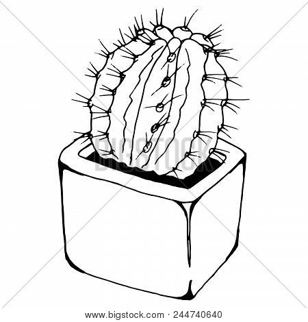 Cactus In A Pot. Vector Illustration Of Cactus. Hand Drawn Cactus In A Pot. Doodle Home Flower In A