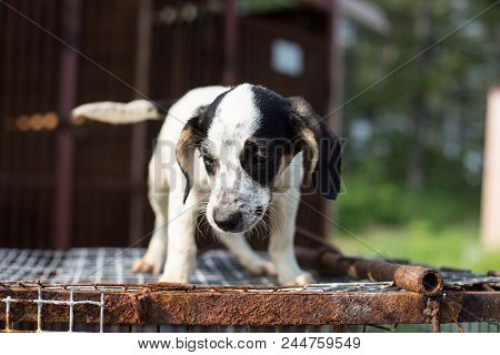Portrait Of Abandoned Sad Puppy From A Shelter Standing On The Cage In The Shelter