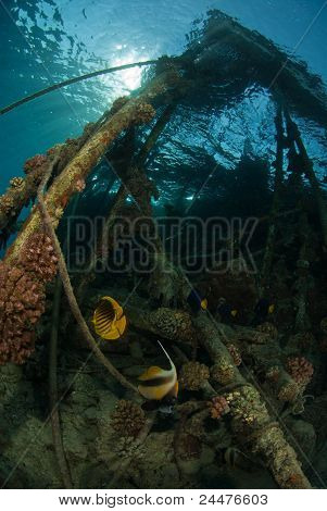 The view of coral growing on pillars and butterfly fish swimming around Red sea Egypt poster