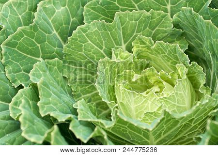 Planting Vegetables For Sale, Produce Healthy Vegetables. Green Leafy Vegetables Are Beneficial. Hea