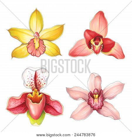 Collection Orchids On A White Background. Sketch Done In Alcohol Markers. You Can Use For Greeting C