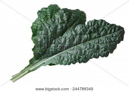 Curly leaf Cabbage or Kale, Nero di Toscana (Brassica oleracea) poster