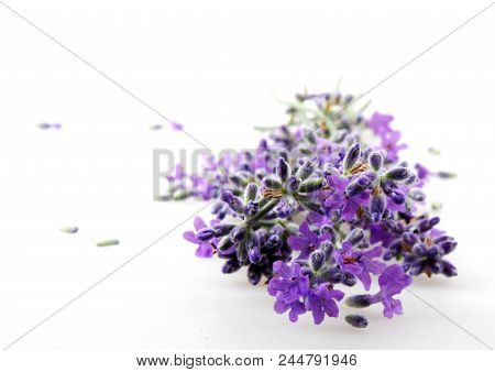 Lavender Flower Isolated On White Background Stock Photos