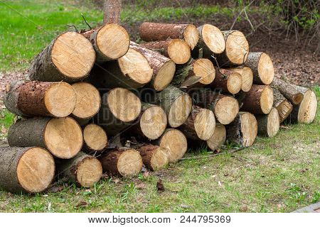 Wooden Logs Of Pine Woods In The Forest, Stacked In A Pile. Freshly Chopped Tree Logs Stacked Up On