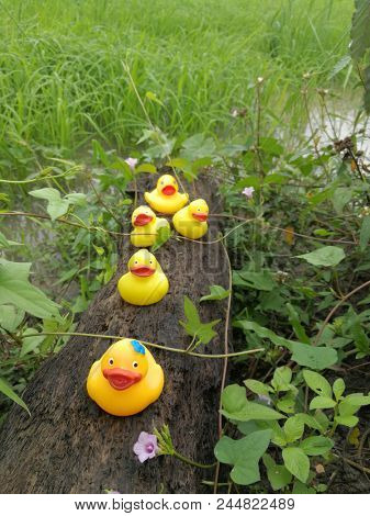 Rubber ducks enjoying outdoors