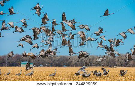 Northward Sandhill Crane migration through Nebraska