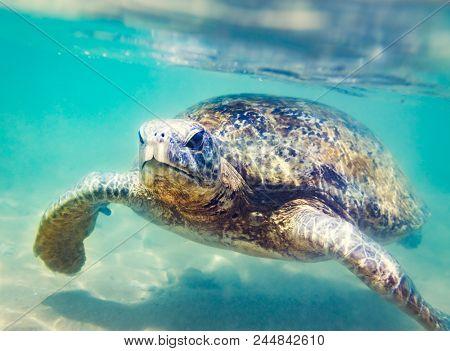 Sea turtle underwater at Hikkaduwa beach. Sri Lanka sealife