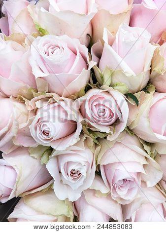 bouquet rose -close up