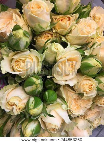 Beautiful bouquet rose