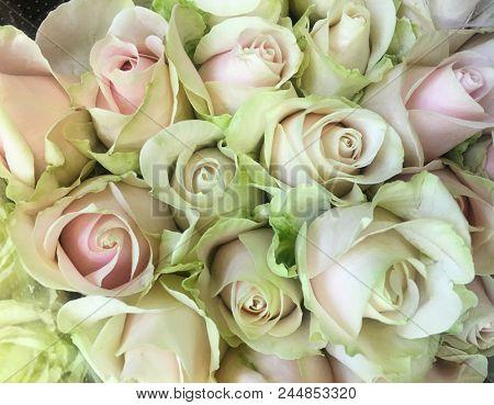 Beautiful bouquet rose background