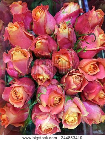 bouquet rose background