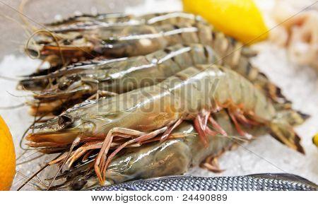 Shrimps On Market Stall
