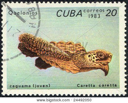 Oceanic Turtle