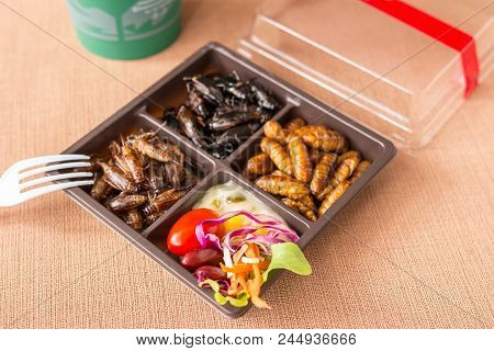 Insect Food Collection - Cricket, Worm Insects With Vegetable Salad In The Brown Food Boxes. Healthy