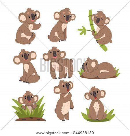 Koala Bear Set, Australian Marsupial Animal Character In Different Situations Vector Illustrations I