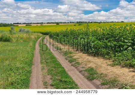 Summer Landscape With An Earth Road Between Meadow And Flowering Sunflower Field Near Dnipro City In