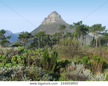 Cape Town, South Africa, With Trees And Other Vegetation  In The Fore Ground And Lions Head Mountain