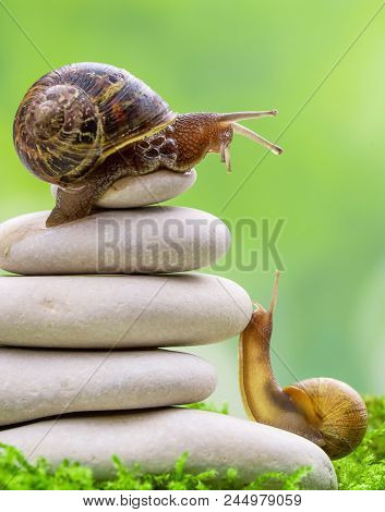 A Snail On The Top Of A Pile Of Pebbles Encourages Its Partner. Motivation, Coaching Teamwork, Partn