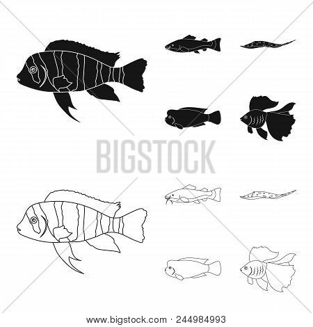 Frontosa, Cichlid, Phractocephalus Hemioliopterus.fish Set Collection Icons In Black, Outline Style