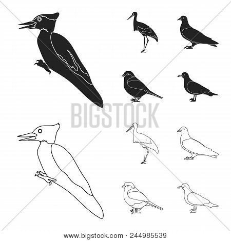 Woodpecker, Stork And Others. Birds Set Collection Icons In Black, Outline Style Vector Symbol Stock