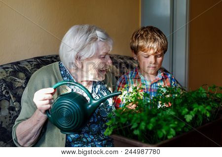 Active Little Preschool Kid Boy And Grand Grandmother Watering Parsley Plants With Water Can At Home