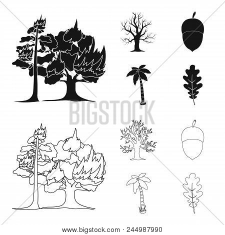 Burning Tree, Palm, Acorn, Dry Tree.forest Set Collection Icons In Black, Outline Style Vector Symbo