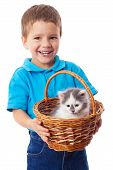 Little boy with kitty in wicker isolated on white poster