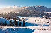 Borzhava mountain ridge in winter. spruce forest on snowy hillside in haze. lovely landscape of Carpathian mountain located in Pylypets village of Ukraine, popular tourist destination poster