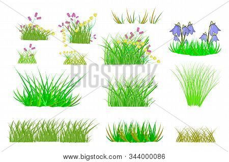 Grass Set Isolated On White Background. Collection With Summer Green Grass And Flowers. Realistic Gr