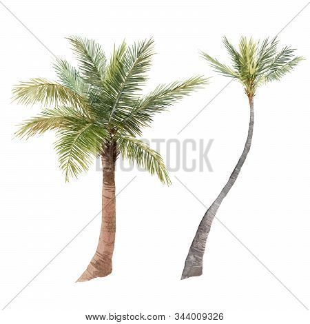 Beautiful Watercolor Tropical Palm Stock Illustration. Hand Drawn Isolated Jungle Tree On White Back