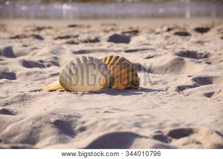 Close-up Of A Two Seashell On The Beach