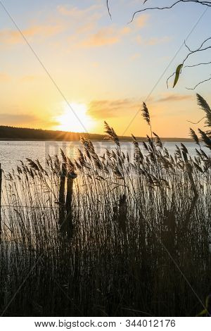 Beautiful Sunset At The Lake With Reeds