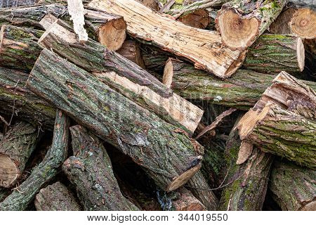 Logs Close Up. Cut Stack Of Logs Covered With Moss. Stack Of Firewood. Woodpile Of Chopped Logs Prep