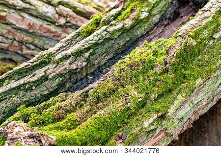 Tree Bark. Logs For Firewood Covered With Moss. Stack Of Firewood. Woodpile Of Chopped Logs Prepared