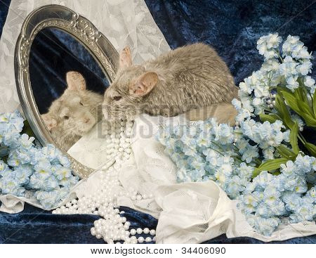 Chinchilla Reflection