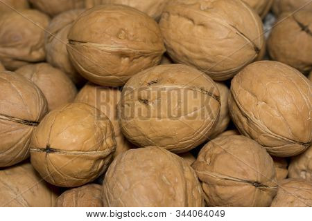 Large Walnut Unpeeled From The Shell Close Up
