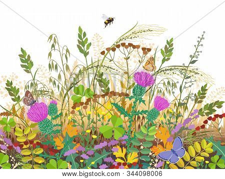 Floral Composition Made With Autumn Meadow Plants And Insects. Fading Grass, Colorful Wild Flowers,