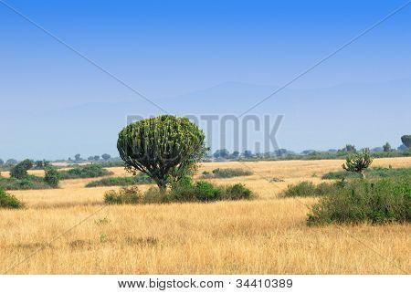 Foothills Of The Rwenzori